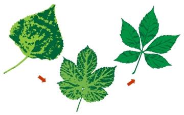 複葉植物の戦略